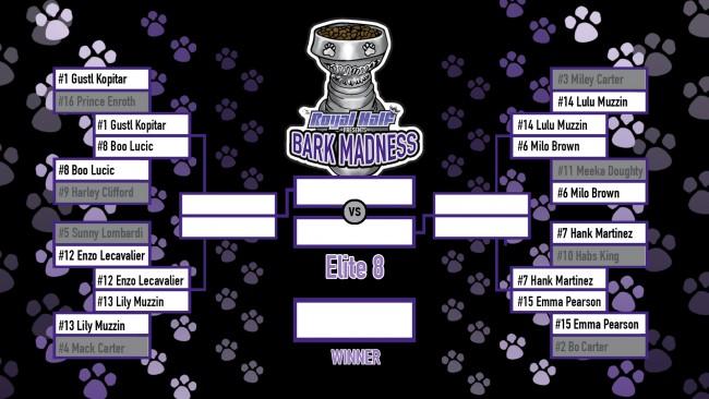 BarkMadness Elite 8 shaded