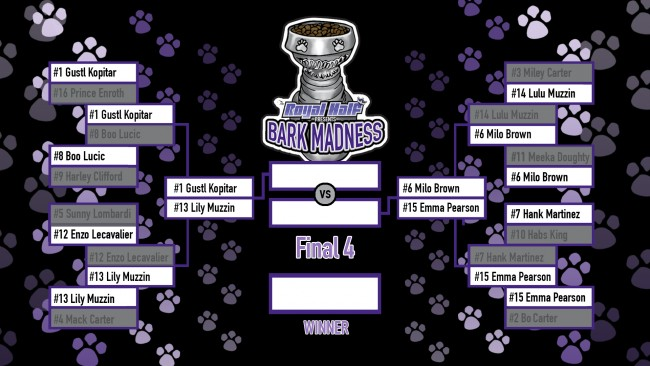 BarkMadness final 4